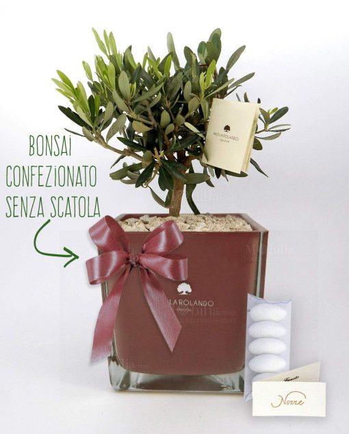 bomboniera ulivo con vaso vetro oro rosa paola rolando con nastro e confetti