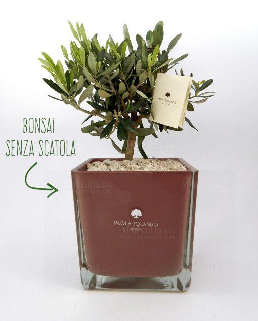 bonsai olivo con vaso vetro oro rosa paola rolando