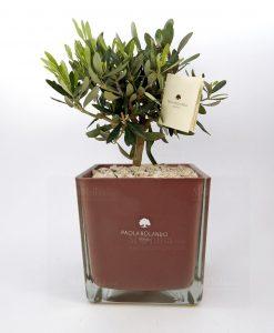 bonsai ulivo con vaso quadrato oro rosa paola rolando