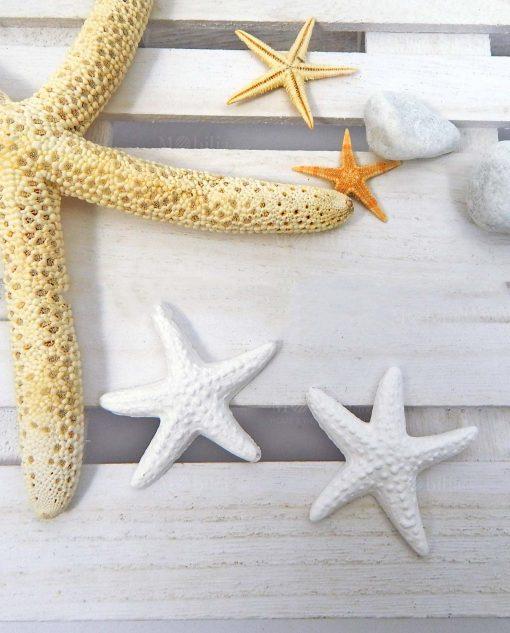 applicazione stella marina in gesso bianco