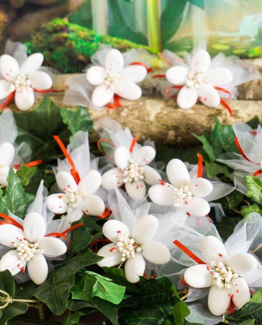 fiori di sulmona bianchi con pistilli rossi