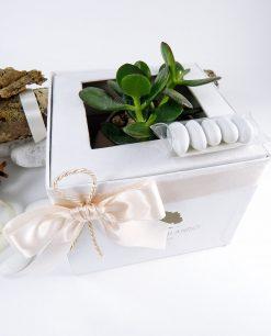 bomboniera pianta grassa succulente con scatola e confetti