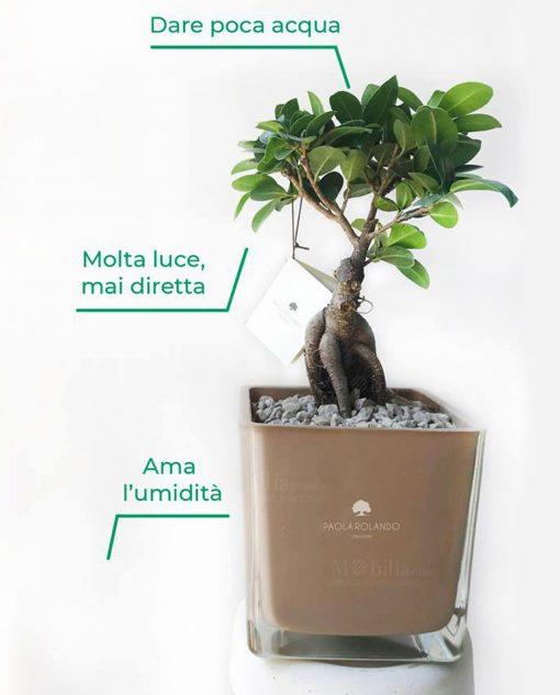 bonsai con vaso vetro nocciola paola rolando