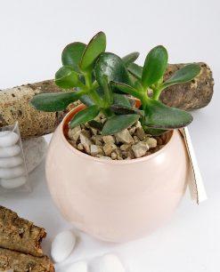 piantina grassa succulente con vaso sfera skin paola rolando