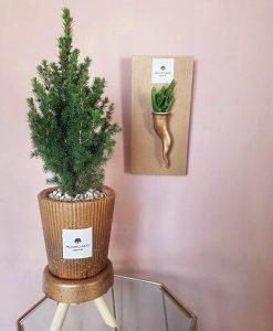 pino vero con vaso cemento bronzo e trespolino paola rolando