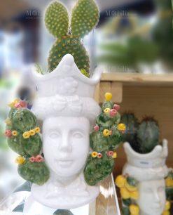 portapiante testa di moro linea i mori con pianta cactus ad emozioni