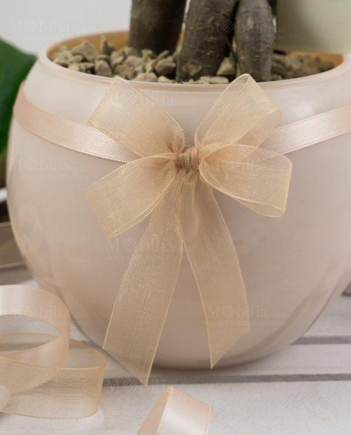 bomboniera bonsai ginseng vaso vetro sfera skin paola rolando con fiocco