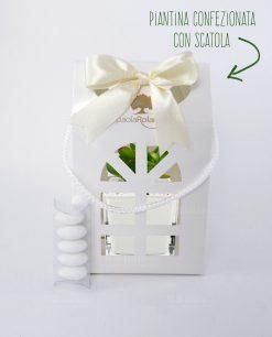 bomboniera pianta con vasetto vetro paola rolando con lanterna cartoncino e fiocco panna