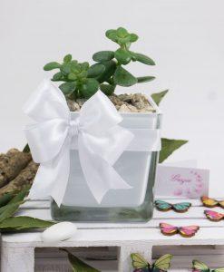 bomboniera pianta grassa con vasetto quadrato vetro paola rolando con doppi fiocchi bianchi