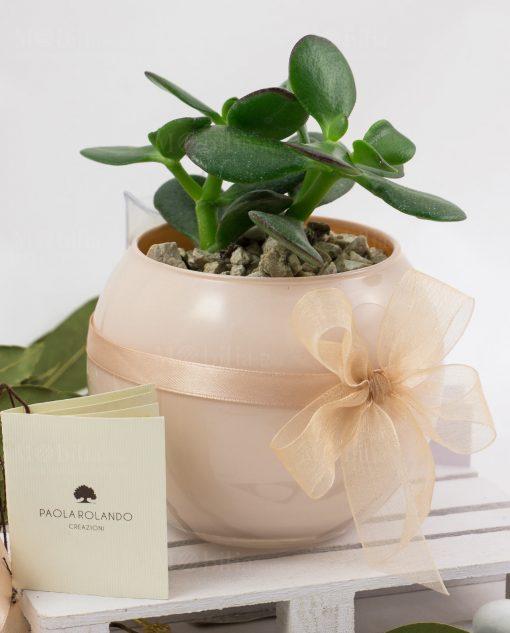 bomboniera pianta grassa con vaso sfera skin paola rolando con doppio fiocco