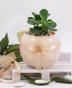 bomboniera pianta grassa succulenta con vaso sfera paola rolando doppio fiocco