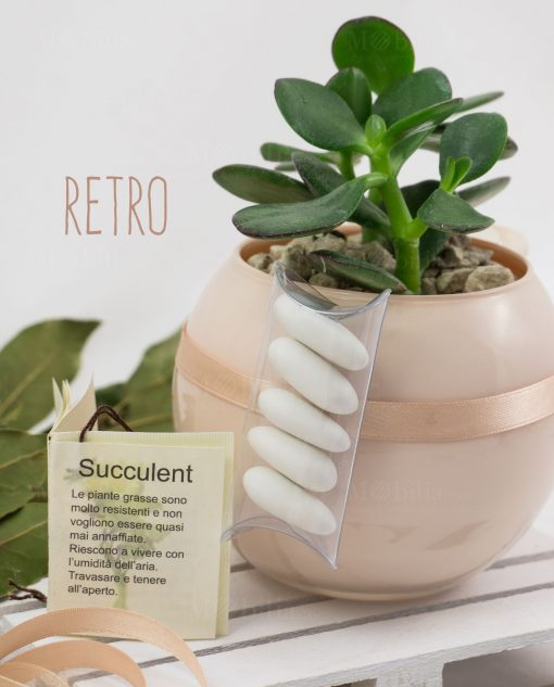 bomboniera pianta succulenta con vaso sfeera skin paola rolando con tubicino e confetti