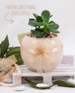 bomboniera piantina grassa succulenta con vaso vetro skin paola rolando con doppio fiocco