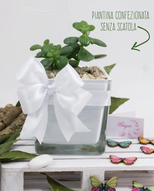 bomboniera vasetto quadrato con pianta succulenta paola rolando con nastro bianco