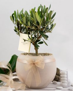 bomboniera bonsai ulivo con vaso sfera skin paola rolando con doppio fiocco