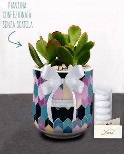 bomboniera pianta grassa con vaso mug paola rolando linea 102 con nastro e confetti
