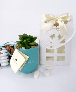 bomboniera pianta grassa con vaso tondo paola rolando scatola lanterna e nastro panna