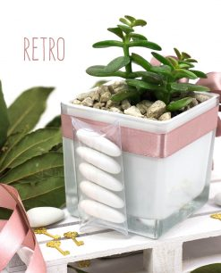 bomboniera pianta grassa con vaso vetro quadrato paola rolando con tubicino e confetti