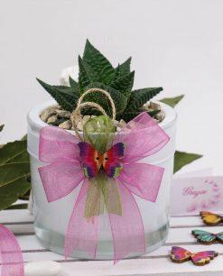 bomboniera pianta grassa vaso cilindro paola rolando nastro rosa verde e farfalla colorata