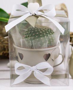 bomboniera secchiello metallo tortora con piantina grassa e scatola trasparente