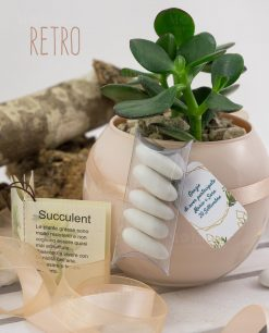 bomboniera vaso sfera con pianta grassa paola rolando con tubicnino bigliettino e nastro