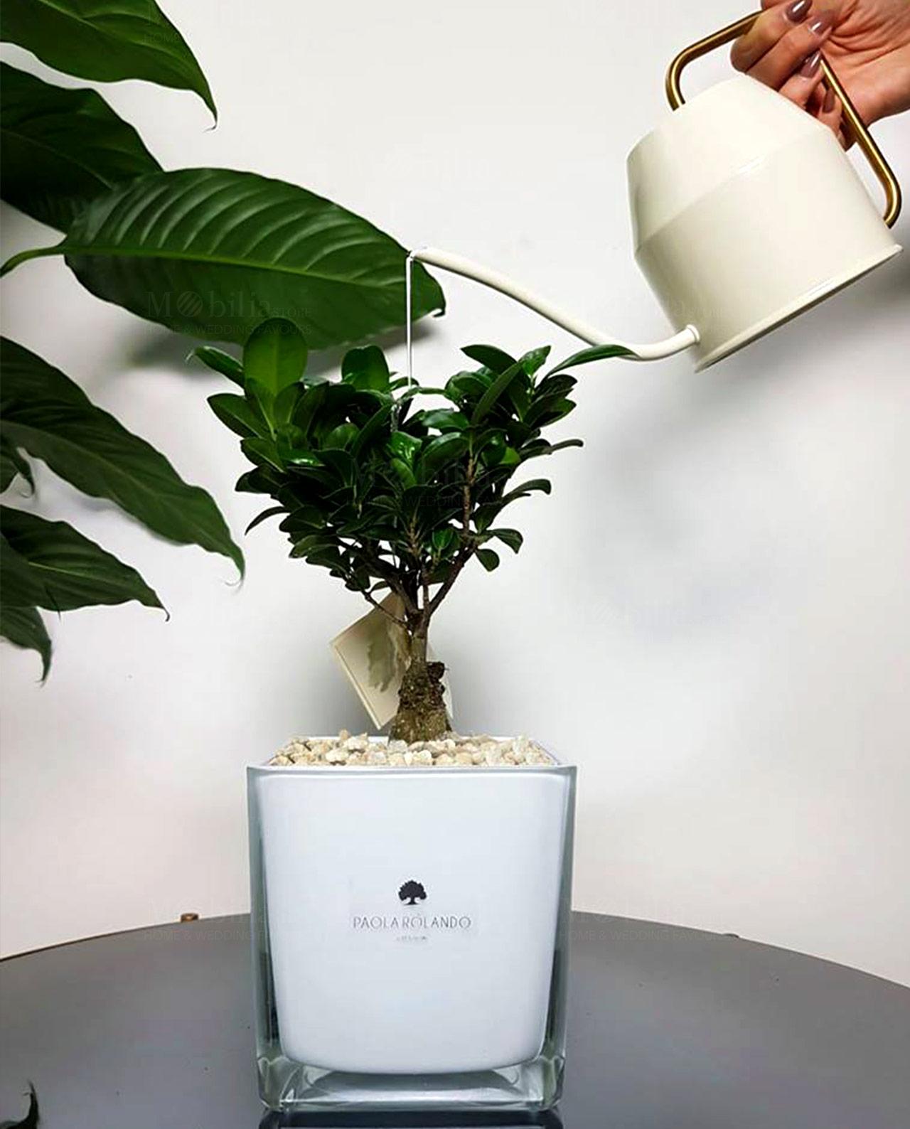 bonsai con vaso vetro quadrato bianco paola rolando