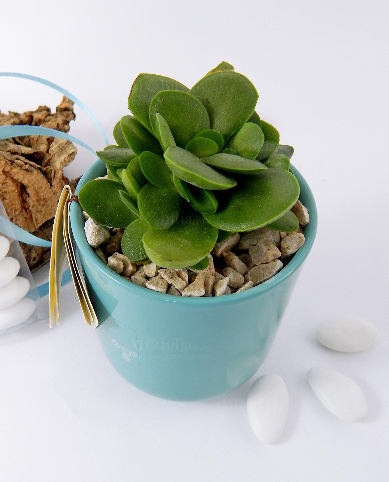 pianta grassa succulenta con vaso vetro tondo acqua paola rolando