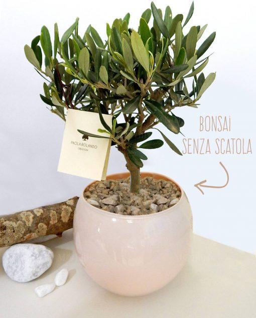 pianta ulivo con vaso vetro a sfera colore skin paola rolando