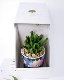 vasetto conico decorato con pianta grassa paola rolando e scatola