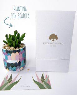 vasetto mug con pianta grassa linea 102 paola rolando con scatola