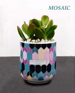 vasetto mug con pianta grassa succulenta decoro mosaic linea 102 paola rolando