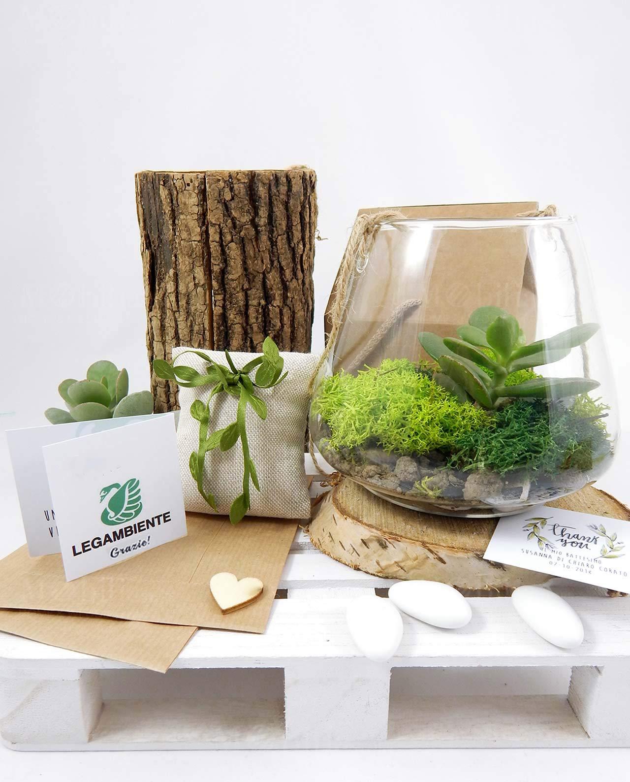 Terrario Per Piante Grasse bomboniera legambiente terrario airplant con pianta grassa