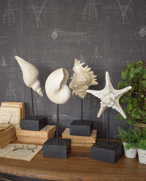 scultura da tavolo conchiglia e stella marina vari modelli assortiti 4 pezzi orchidea milano