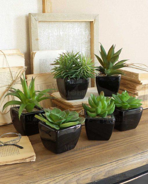 set 6 pezzi vaso nero con pianta grassa orchidea milano