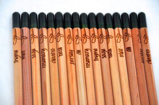 sprout matita che diventa pianta 3