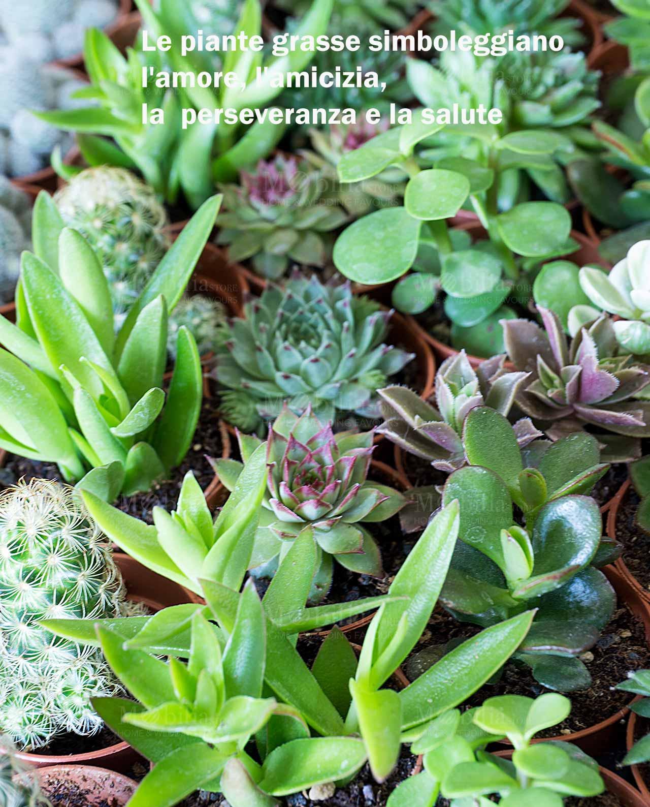 """Piante Grasse Piccole Prezzi bomboniere solidali legambiente porta piante casetta terracotta con pianta  """"love is green"""""""